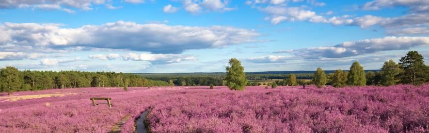 Buchen Sie Ihren Sommerurlaub mit HRS! Beste Unterkünfte, günstiger Preis, herrliche Landschaft, zahlreiche Attraktionen: Die Lüneburger Heide wartet auf Sie!