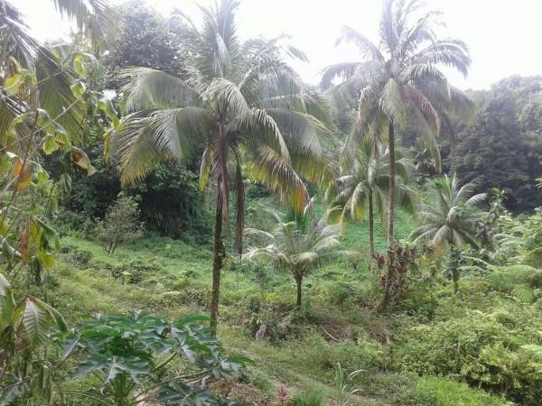 Hotel Roots Jungle Retreat