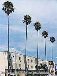 The Kinney Venice Beach