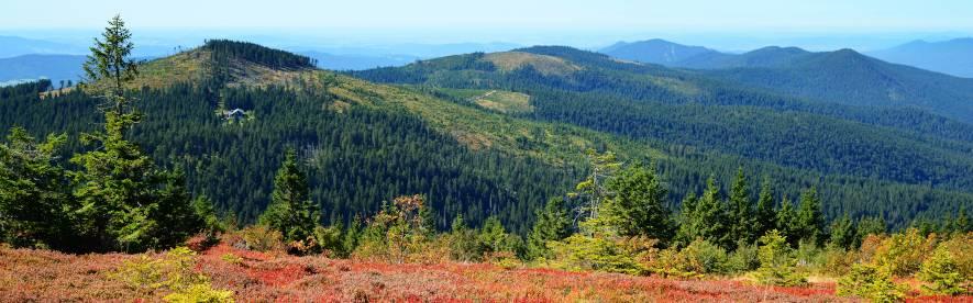Sommerurlaub mit HRS – beste Unterkünfte, günstige Preise, der Bayerische Wald wartet auf Sie!